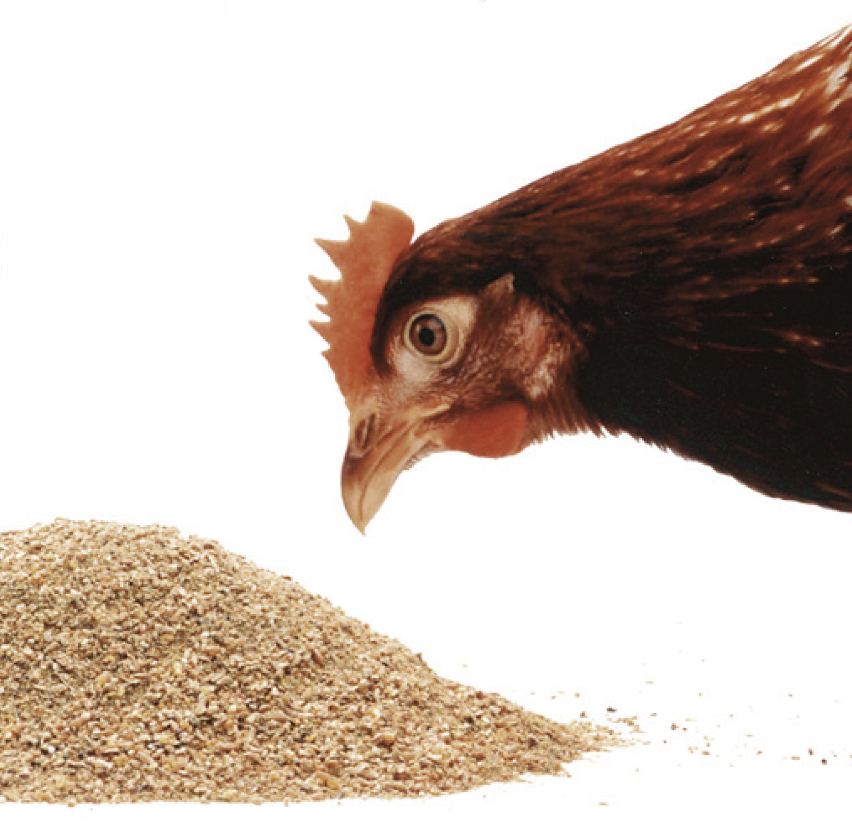 Practical aspects of feeding, crude fibre applications and problems with digestion in poultry feed?