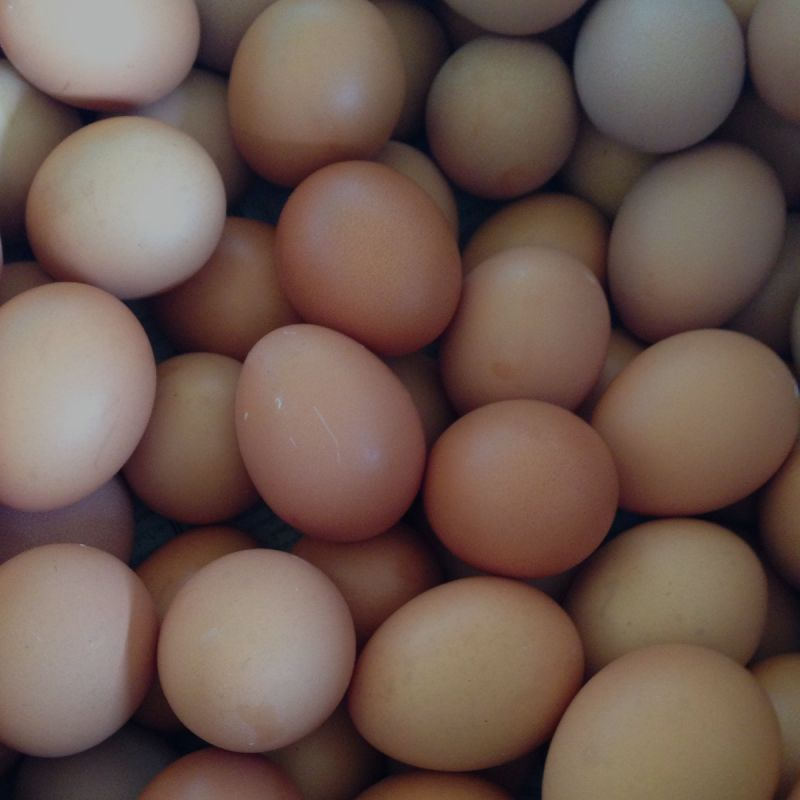 Key factors for successful hatching egg handlingHatching eggs: Taking care of temperature and hygiene