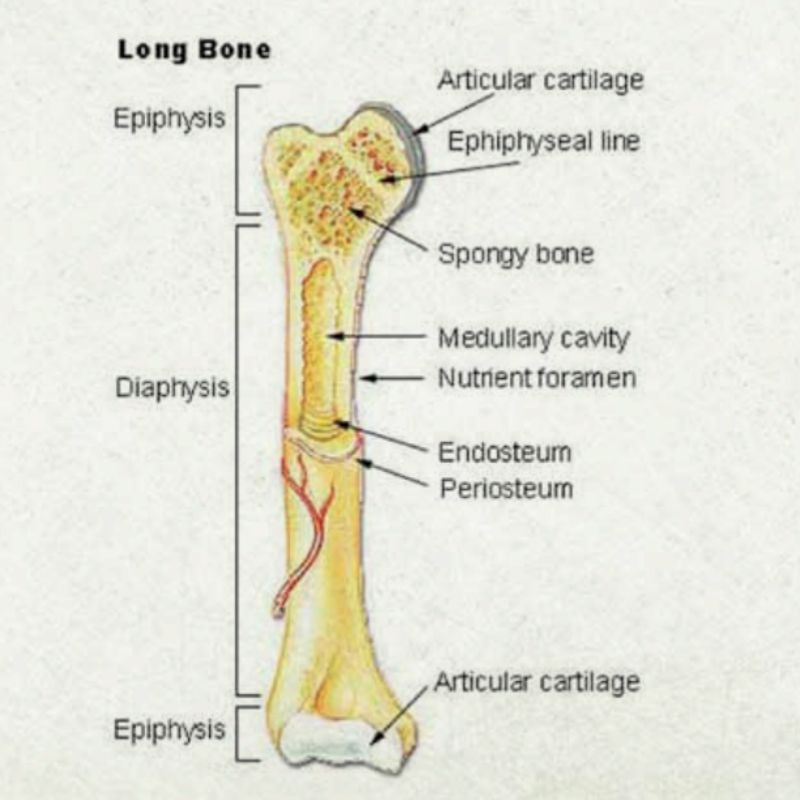 Improving bone strength in poultry