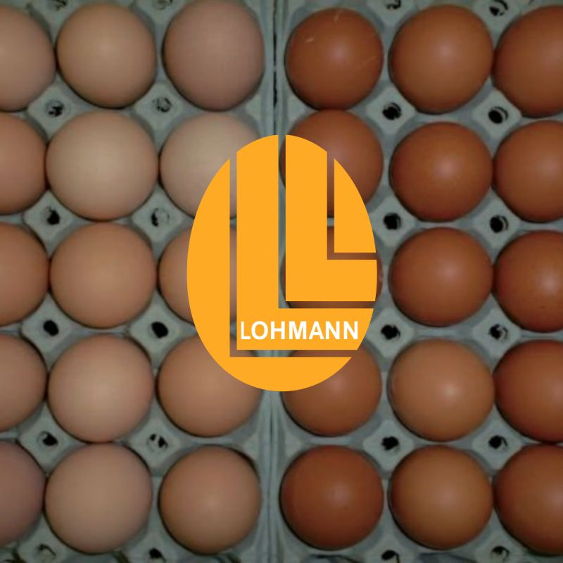 LOHMANN DUAL – Layer and Broiler at the very same time